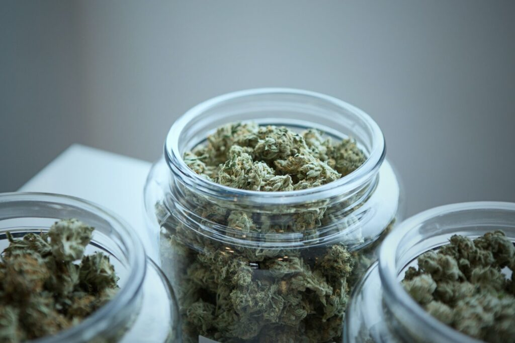 cannabis licensing